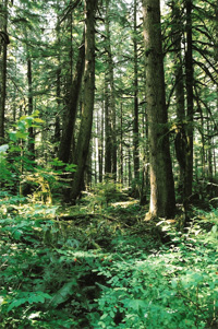sw_forest_near_rainier_01.jpg